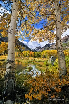 """""""Fall Color in the High Sierra Nevada"""" Yosemite. Photo by Darvin Atkeson. --I miss seeing the Aspens in fall. Mother Earth, Mother Nature, Beautiful World, Beautiful Places, All Nature, Sierra Nevada, Best Photographers, Beautiful Landscapes, The Great Outdoors"""