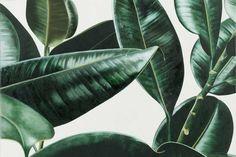 wallpaper pattern tropical - Pesquisa Google