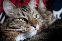 The Fluffington Post. .. Cat runs for senate seat in Virginia.