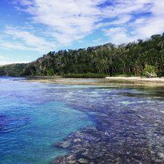 Exploring spectacular reefs - Vanua Levu Fiji [1224x1224][OC] -zoezm
