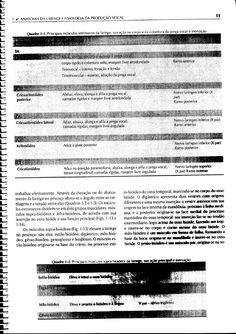 Voz - O Livro Do Especialista VOL I