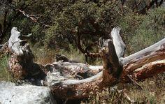 Naturaleza muerta. El árbol vuelve al suelo que le dio la vida, la Madre Tierra.