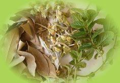 . Natural Medicine, Herbal Medicine, Healthy Beauty, Green Life, Alternative Medicine, Natural Cures, Things To Know, Asparagus, Herbalism