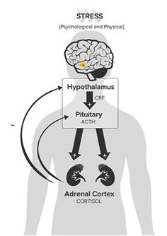 Optimizing HPA Axis Function
