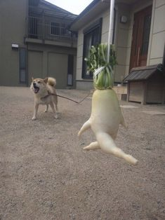 Japanese Farmer Photographs Odd-Shaped Vegetable In Humorous Situations