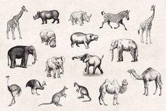 Wild-Animals-Vintage-Engraving-Illustrations-02.jpg (1340×892)