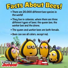 Learn more about Bees from DIsney Junior's The Hive! Honey Bee Facts, Different Bees, Bee Activities, Types Of Bees, I Love Bees, Bees And Wasps, Bee Party, Bee Friendly, Bee Crafts