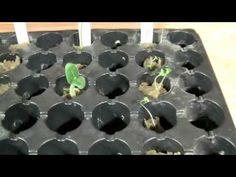 Starting Seeds for Hydroponic Systems