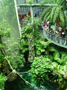 California Academy of Sciences! SF, CA. 3 story walk-through butterfly terrarium. Planetarium, Aquarium, Natural History Museum. All ages.