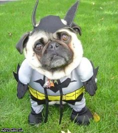 Lesa shows me a picture today of Darth Vader pug and asks if I would do that to my dog... My answer.. ABSOLUTELY!!!