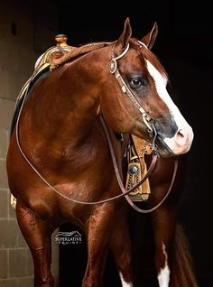 American Quarter Horse, Horse Tack, Beautiful Horses, Artwork, Animals, Beauty, Pretty Horses, Work Of Art, Animales