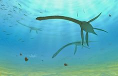 The Elasmosaurus was around 40 feet long, with it's neck accounting for half it's length.