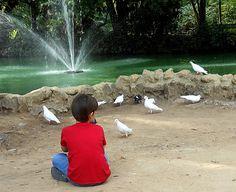 Sosiego entre palomas