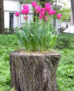 18 Ideas How to Decorate Your Garden, not the particular flower I would plant in a stump, but definitely an interesting idea.