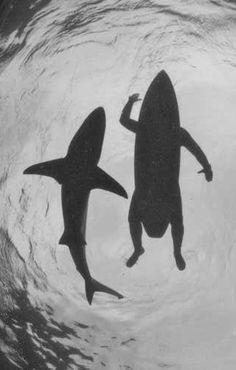 Картинки по запросу frases surf