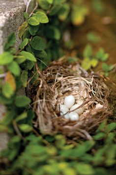 getting a glimpse of a bird's nest with eggs :)