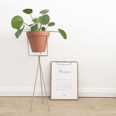 [Interior] ↠ Pilea in Pflanzenständer Ferm Living ♡