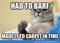 It's a secret fact that all cats know- if you're going to barf, do so on the carpet. My cat, Squiggles, is definitely guilty...