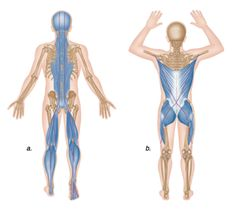 What Is Fascia, Fascia Stretching, Nerd Fitness, Trigger Point Therapy, Muscle Anatomy, Massage Benefits, Face Massage, Massage Oil, Trigger Points
