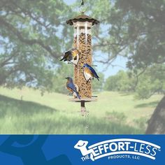 The most important quality in a birdwatcher is a willingness to stand quietly and see what comes. Our everyday lives obscure a truth about existence - that at the heart of everything there lies a stillness and a light. Visit http://ift.tt/2gECSWG to learn more about our custom patented bird feeders! . . . . . . . . #eye_spy_birds #birdlovers #bird #birdphotography #birds_iLLife #ig_bird_watchers #sassy_birds #ig_discover_birdslife #perfect_birds #total_birds #bns_birds #birdwatching…