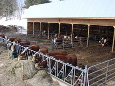 The doors at the end of the barn close in the shop and a two-pen calving area. The doors at the end of the barn close in the shop and a two-pen calving area. Dairy Cow Breeds, Rinder Stall, Show Cattle Barn, Cattle Corrals, Barn Layout, Ranch Farm, Cattle Ranch, Livestock Farming, Farm Plans