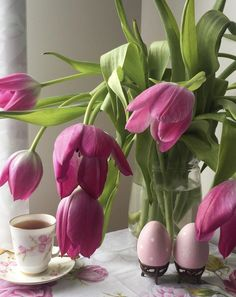 Happy Morning, Pink Tulips, Happy Easter, Spring Time, Yellow, Nature, Flowers, Plants, Black