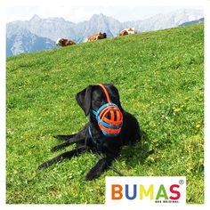 BUMAS auf der Alm #Nature #dog #muzzle Nature Dog, Dog Muzzle, Pet Stuff, Dog Life, Dogs, The Originals, Pet Accessories, Objects, Pet Dogs