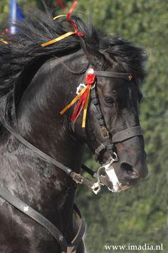 2008 | Menorca Horses