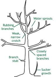 Self Reliant Network: How to prune a Fruit Tree