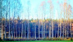 Late Autumn, Framed Prints, Canvas Prints, Going Home, Famous Artists, One Pic, Norway, Art Pieces, Tapestry