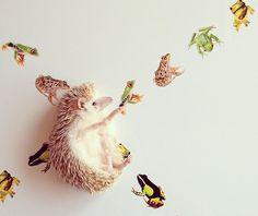 Darcy the hedgehog!