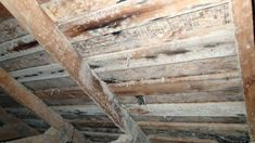 How To Kill White Mold On Wood White Mold In Basement White Mold Removal Tips