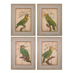 Parrot and Palm Framed Art in Washed Wood, Set of 4