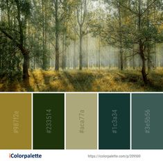 Color Palette ideas from 3368 Nature Images Nature Color Palette, Colour Pallette, Color Palate, Colour Schemes, Color Combos, Theme Forest, Forest Color, Design Seeds, Paint Colors For Home