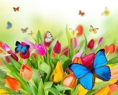 Mariposas | Descargar gratis Tulipanes, Mariposas, deja, Flores Fondos de ...