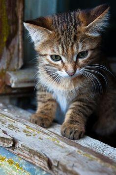 """""""Le chat ronronne le présent. Le chat est toujours dans aujourd'hui... Le chat mijote et ne bout jamais. Le chat est un animal concentré, un poêle à combustion lente."""" Paul Morand"""