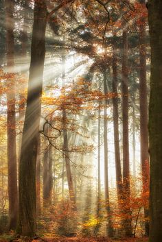 """Lighten the Forest - Wanna touch the rays? Press H to see on Black <a href=""""https://www.facebook.com/LarsvandeGoor"""">FOLLOW ME ON FACEBOOK</a> <a href=""""http://larsvandegoor.com/seebook/"""">FREE eBOOK</a> <a href=""""http://larsvandegoor.com/"""">WEBSITE</a> <a href=""""https://500px.com/photo/110280491/walking-in-sunshine-by-lars-van-de-goor?from=user_library"""">CHECK OUT MY LATEST POST on 500PX</a> <a href=""""https://instagram.com/larsvandegoor/"""">Follow me on Instagram</a>"""