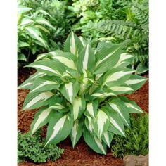 Herbs, Garden, Plants, Pink, Garten, Herb, Flora, Plant, Lawn And Garden