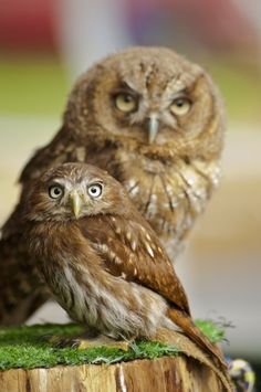 Mum and baby owl by dee wylin on 500px