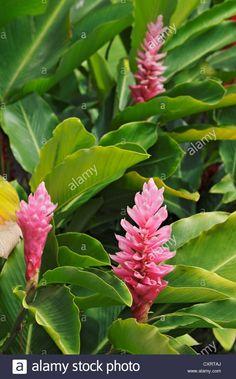 Exotique semences jardin d/'hiver fleurs en pot chambre plante Flammenbaum exot