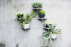 You can build your own green wall with Flexible Garden Modules   Inhabitat - Green Design, Innovation, Architecture, Green Building