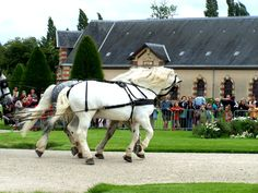 File:Haras in Saint-Lô, Normandië, France.jpg