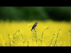 Abraham Hicks - Magical Way [Can you see me, can you hear me] - YouTube