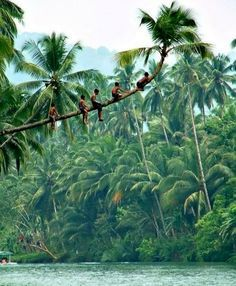 Children in Kumarakom, Kerala, India - Going for a dive in the Lake! WOW! #India http://ticketalltime.com/