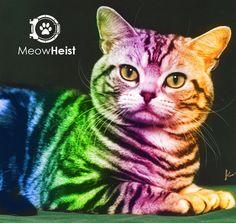 Rainbow Cat | http://i16.photobucket.com/albums/b38/angiedotpangie/rainbowcat-1.jpg