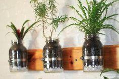 huerto cocina con frascos