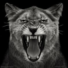 animal black and white photography by wolf ademeit