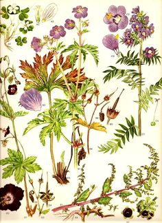 Wild Flowers botanical print, 1970