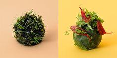 Klopsiki IKEA to dla wielu główna atrakcja podczas zakupów w meblowym imperium. Jak mogą wyglądać ich odmiany w przyszłości? Pracuje nad tym zespół laboratorium badawczego marki – Space10 w Kopenhadze. Nowe Trendy, Cabbage, Vegetables, Food, Essen, Cabbages, Vegetable Recipes, Meals, Yemek