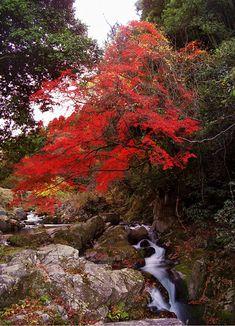 Kurofuchi Fall #Iga #Mie#Japan